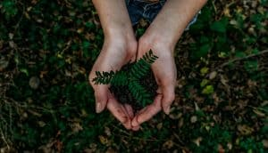 Die GrüneRente – Nachhaltigkeit und betriebliche Altersversorgung