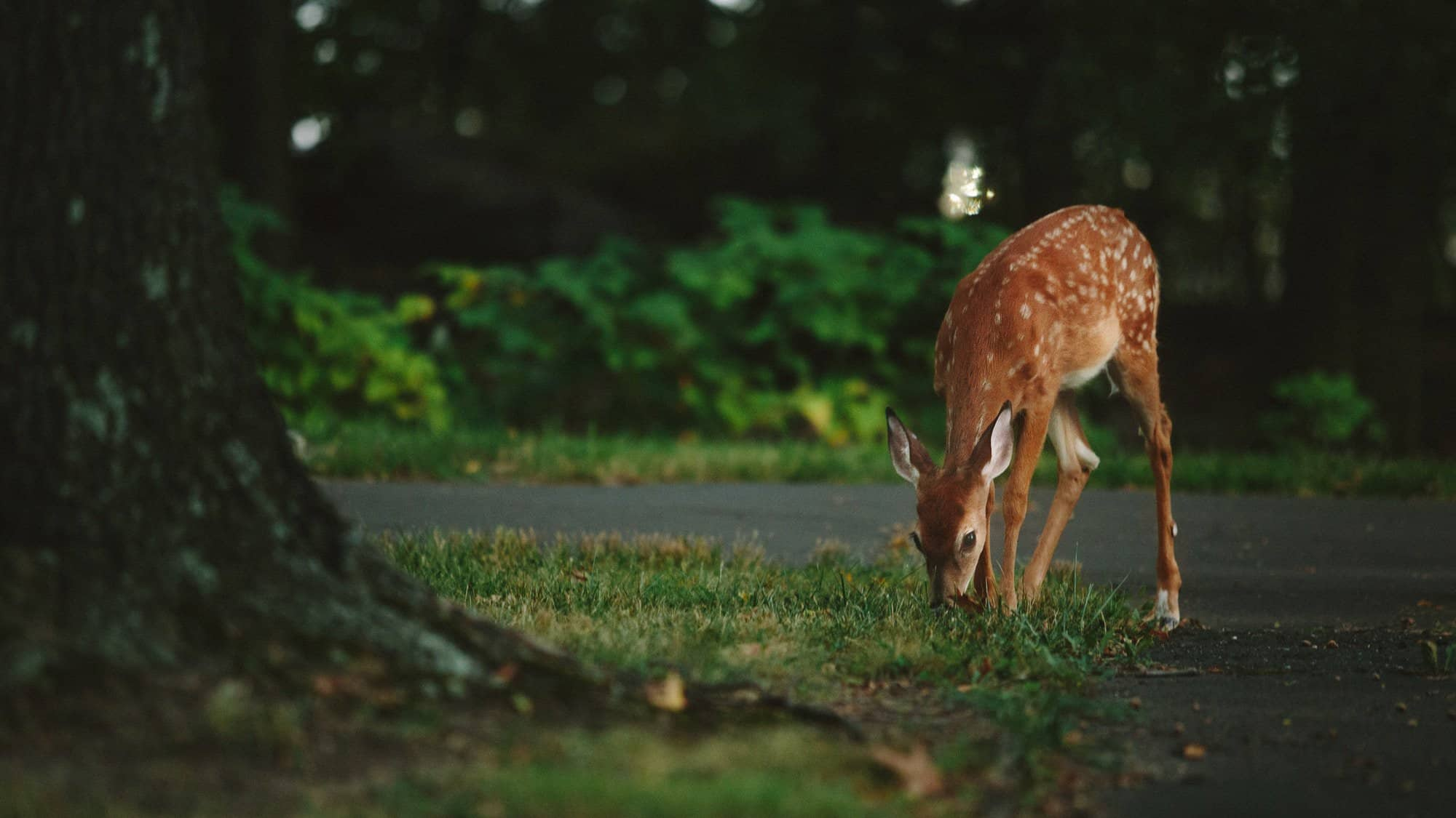 Wildunfälle: Wann die Versicherung nicht zahlt