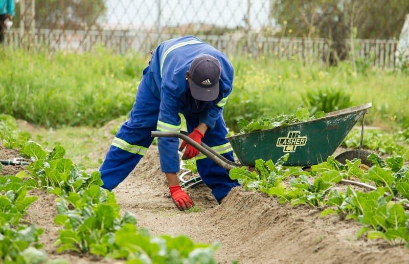 Versicherungsschutz bei Gartenarbeiten - Wann die Versicherung nicht schütz